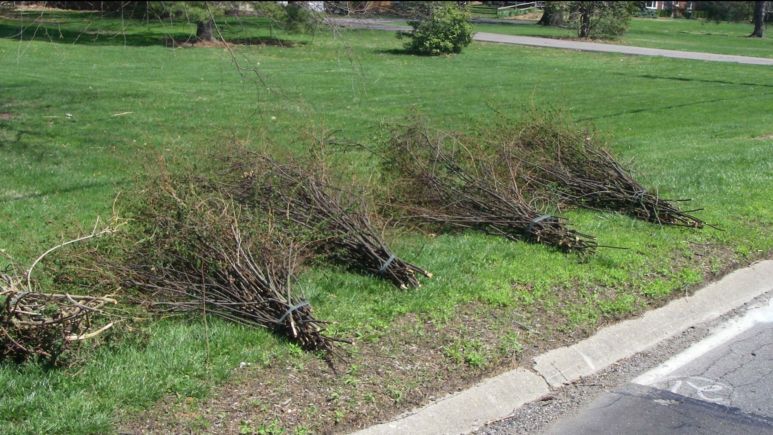Pile of Brush at Curb